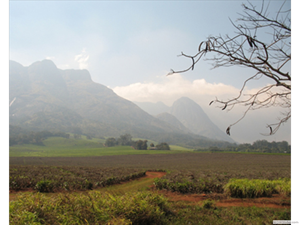 Mulanje Mountain1003