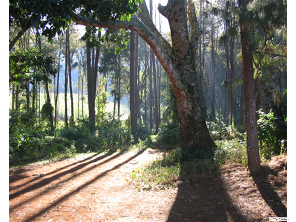Mulanje Mountain1006