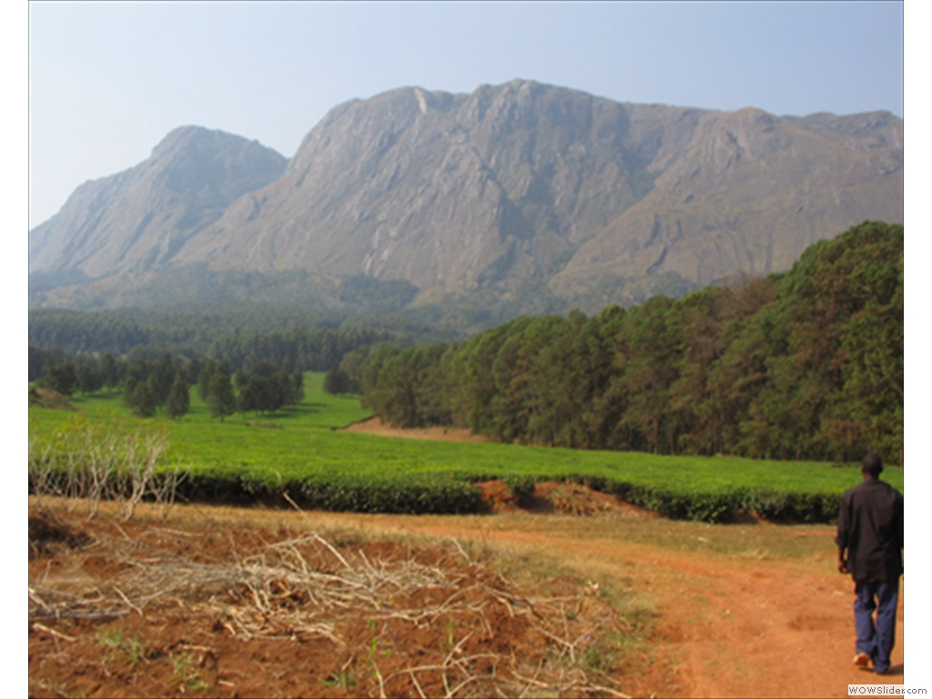 Mulanje Mountain1007