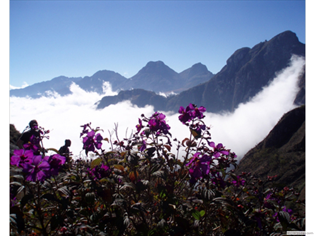 Mulanje Mountain1011